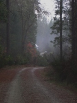 3. Misty Autumn Back Road.Camptonville 11.07