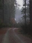 3. Misty Autumn Back Road.Camptonville 11.07