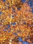 119 Autumn Color