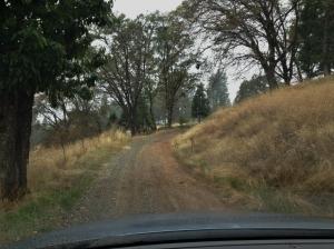 Road into Skyline Harvest